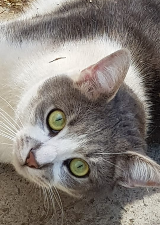 There are so many good reasons to adopt an older cat. Vet-checked, sterilised, vaccinated, micro-chipped. CatzRus is a registered rescue organisation.