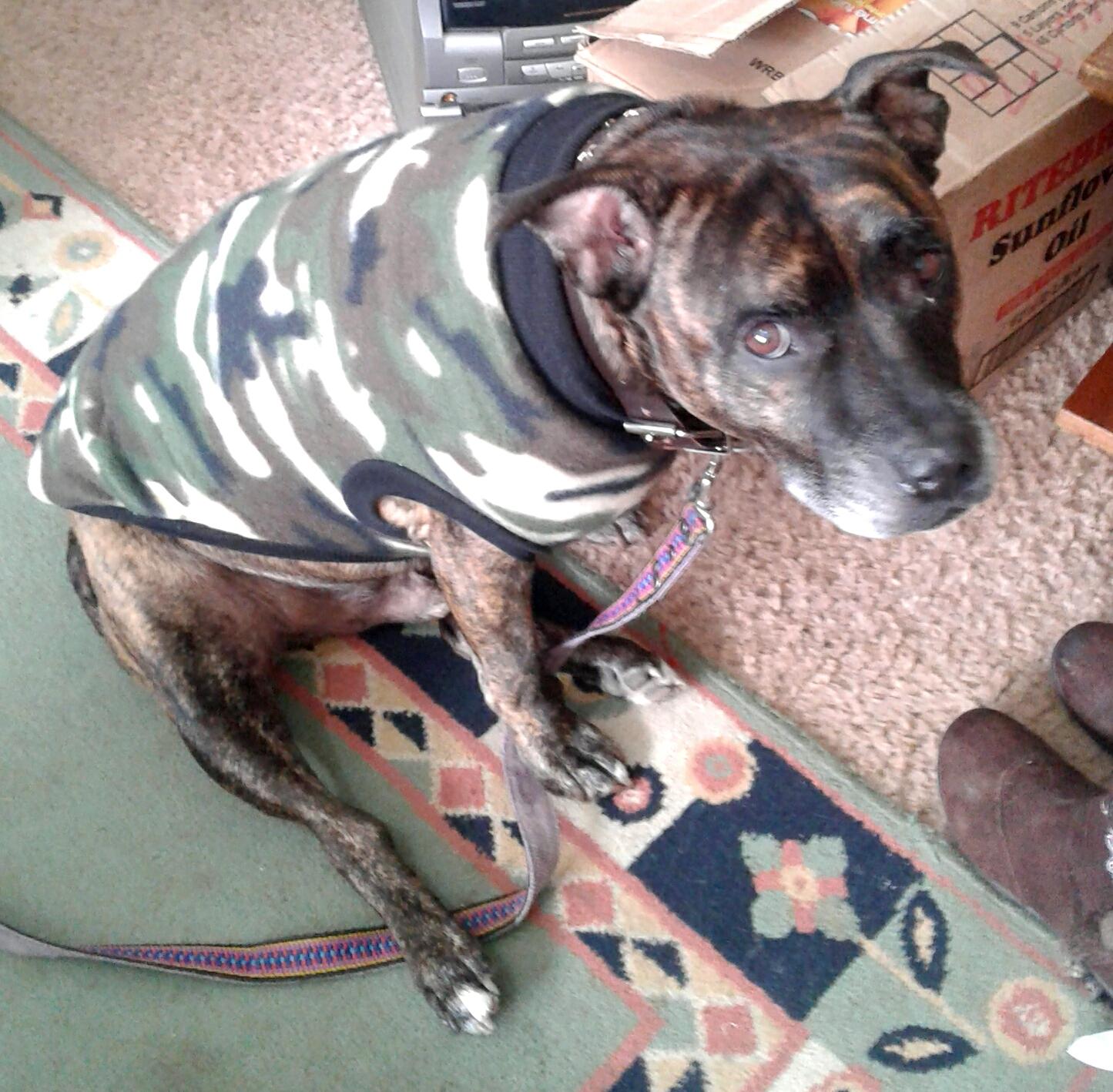 Dog Jackets (Hondejassies) for all Breeds