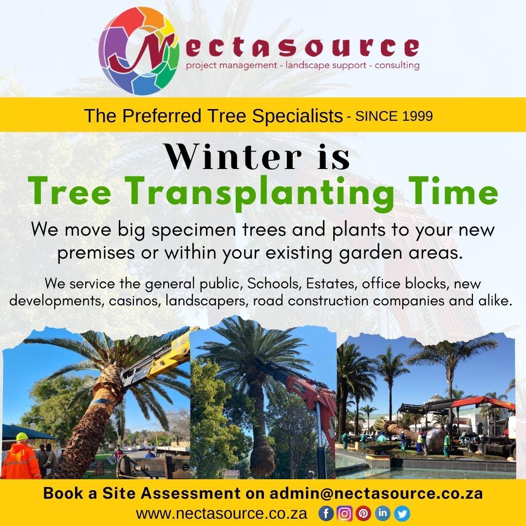 Winter is Tree Transplanting Time