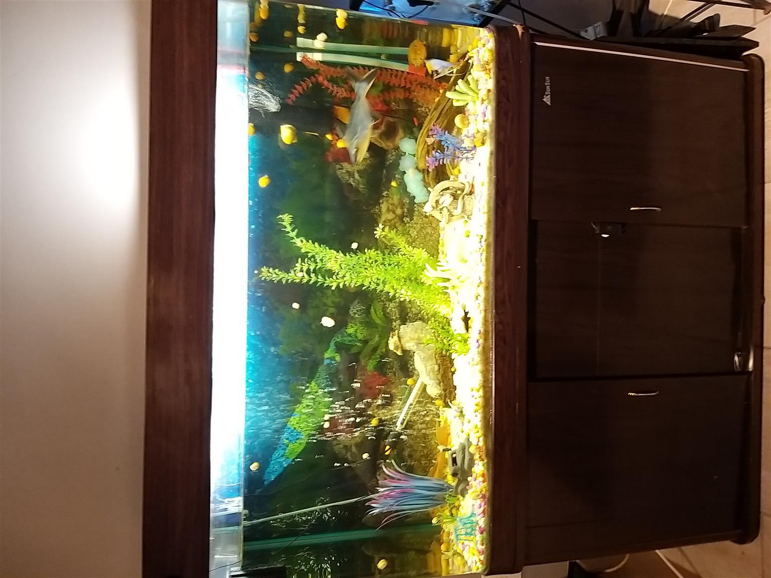380 liter fish tank