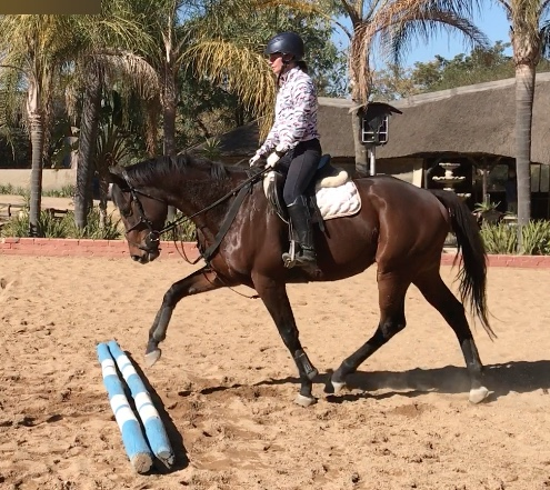 Thoroughbred geldings for sale