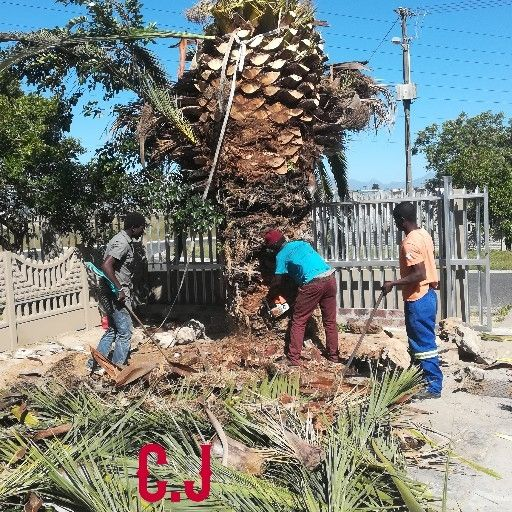 Tree Felling & Palm Cleaning