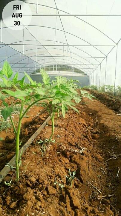 Eastern Cape Greenhouses