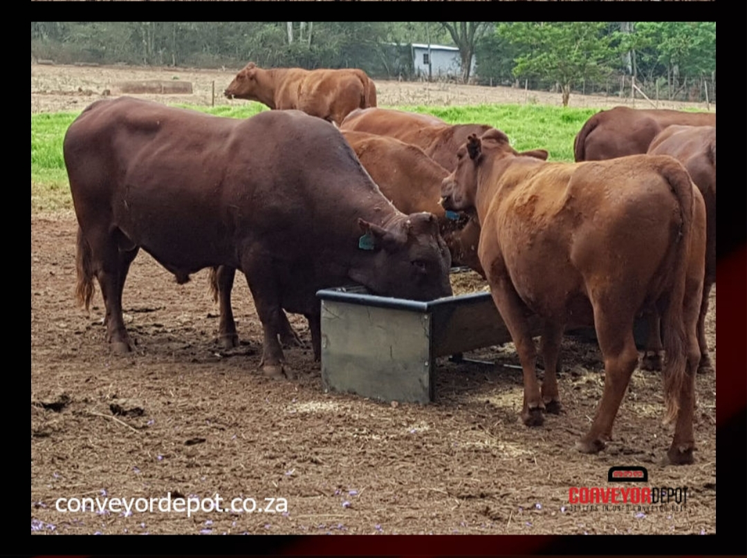 Feedingg troughs at crazy low prices