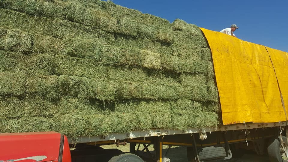 LUCERNE - DIRECT FROM THE FARMER NO AGENT FEES INCLUDED