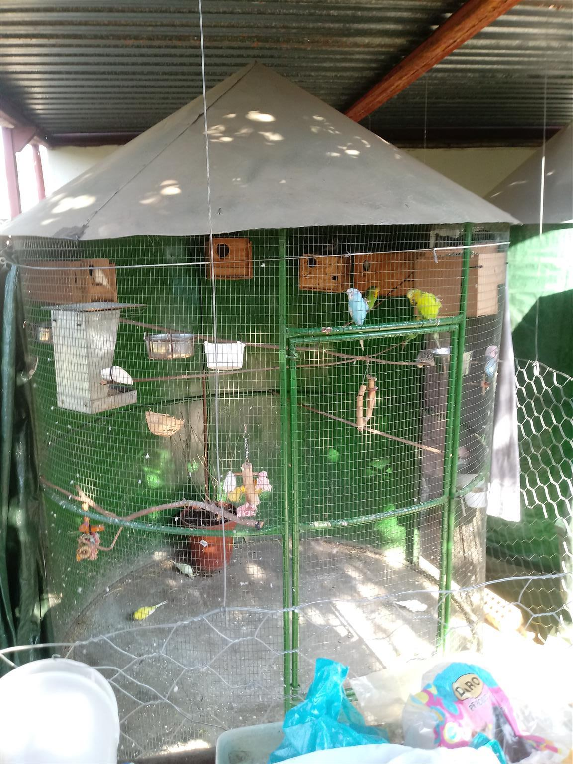 1.8 metre round cage available. Price not negotiable