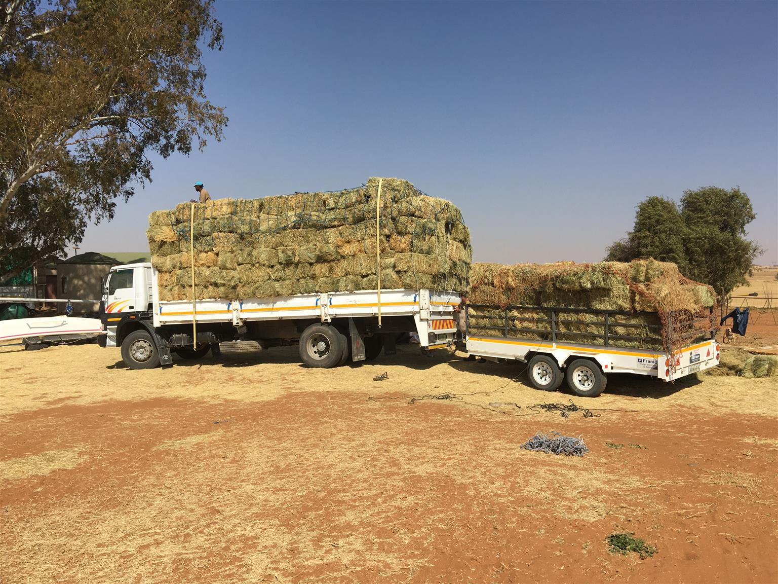 Teff and Lucern for Sale