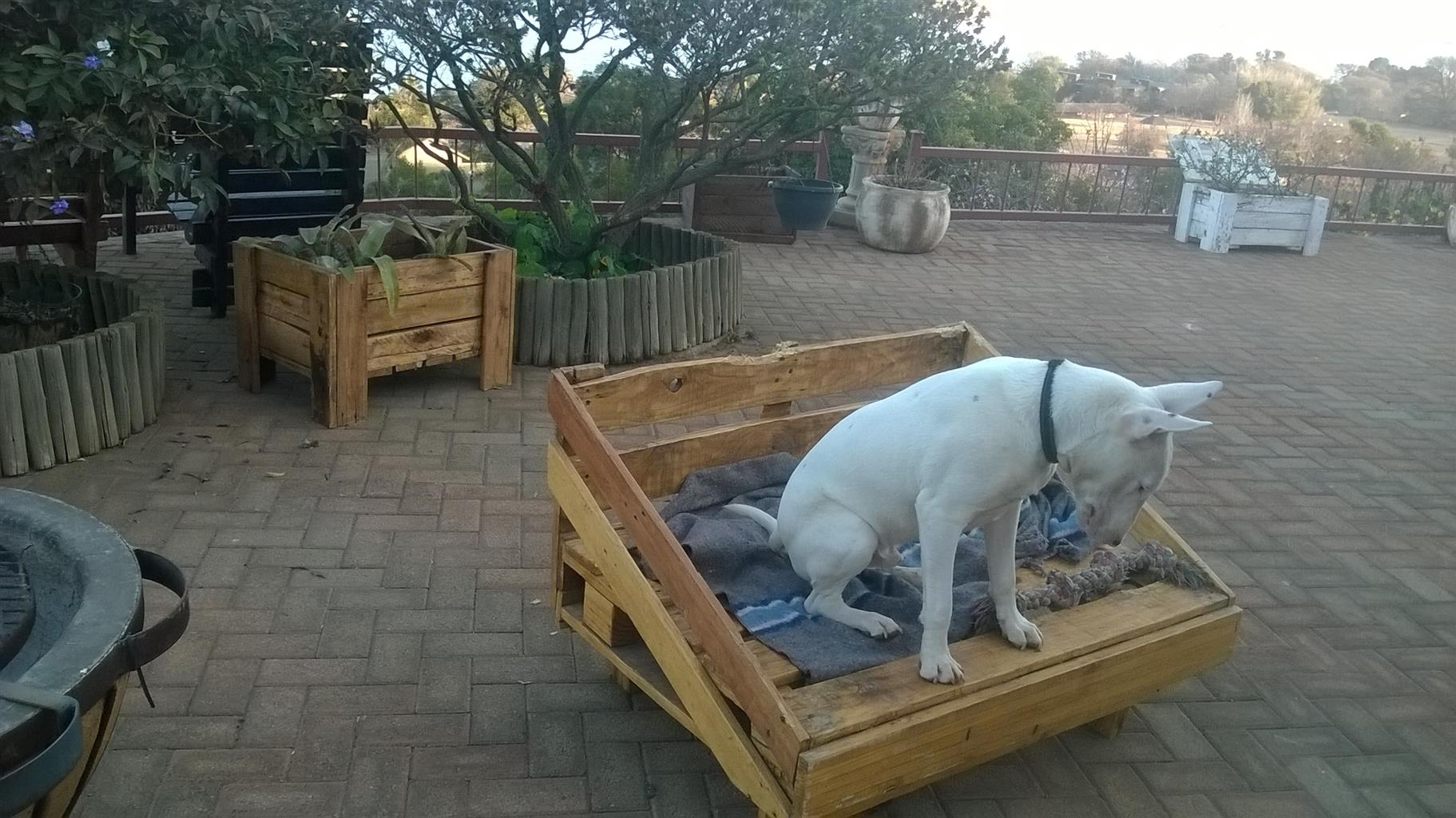 wooden dog furniture