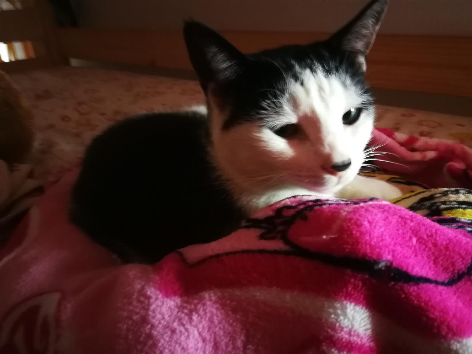 3 loved and cherished cats - Family immigrating
