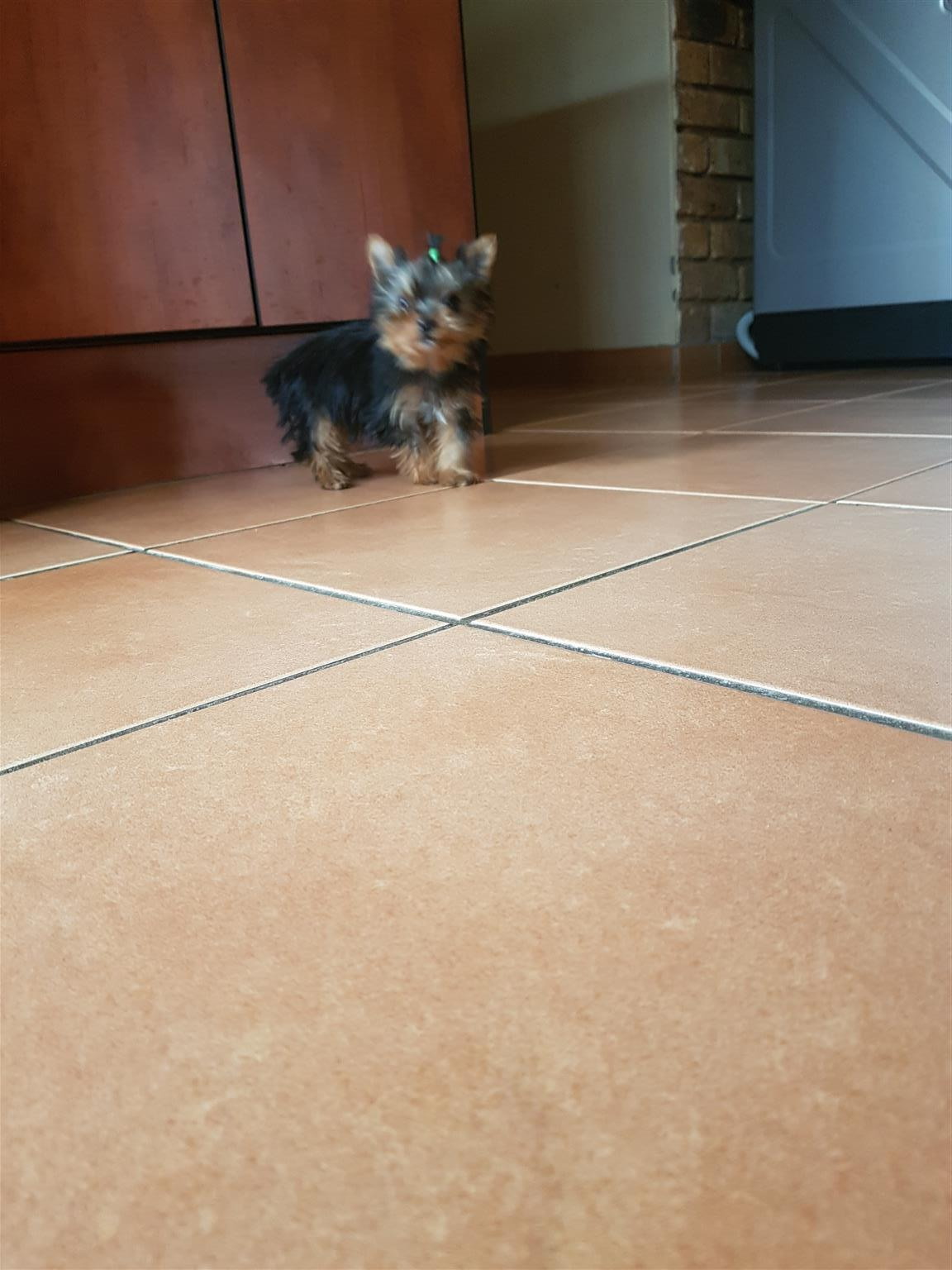 Male black and tan 3m