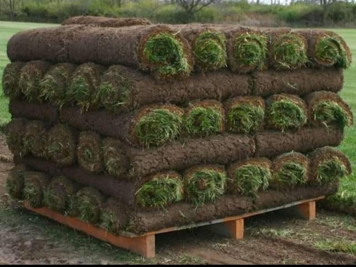 Evergreen Lawn Supplier