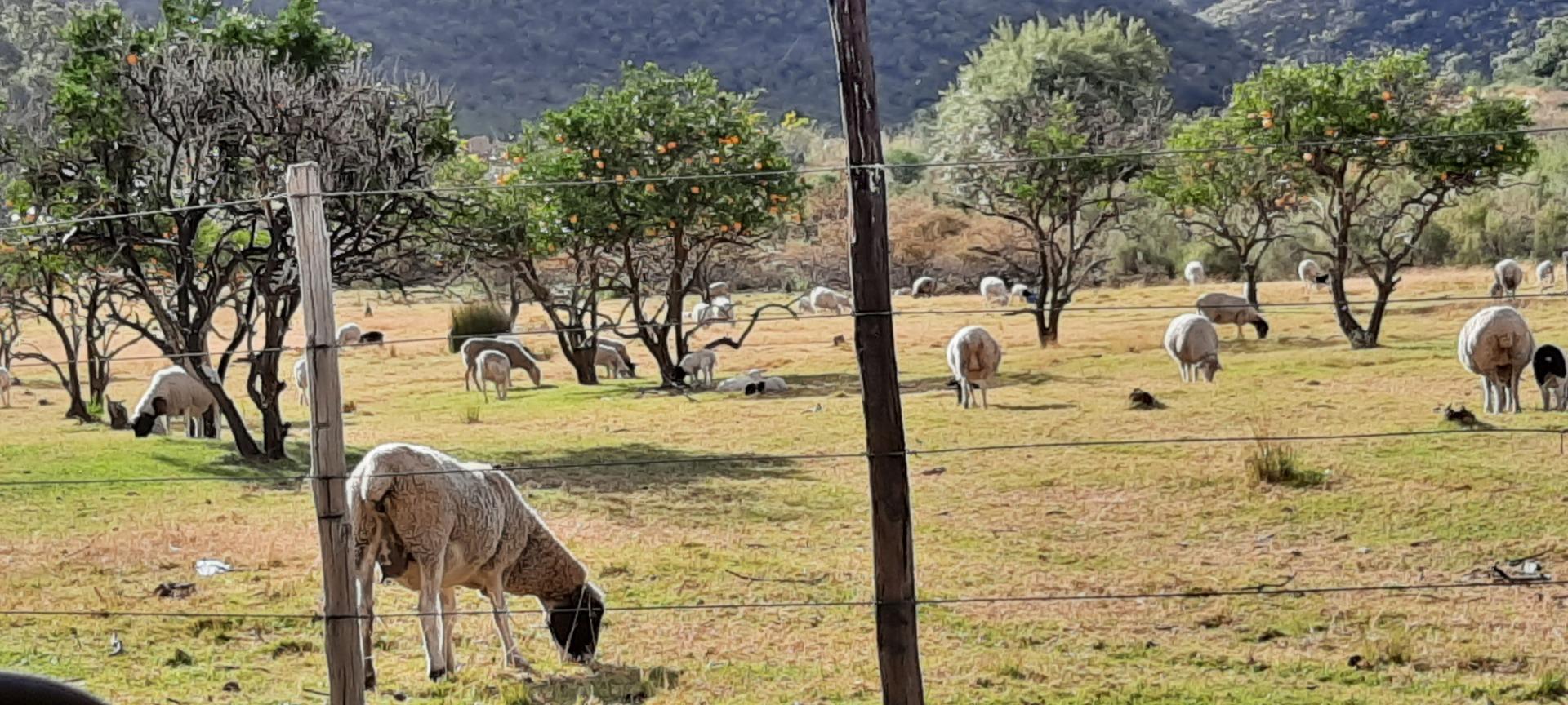 Farm For Sale in Joubertina Rural