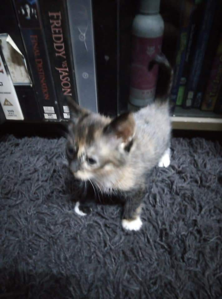 RESCUED REHOMING 5 kittens needs loving homes asap