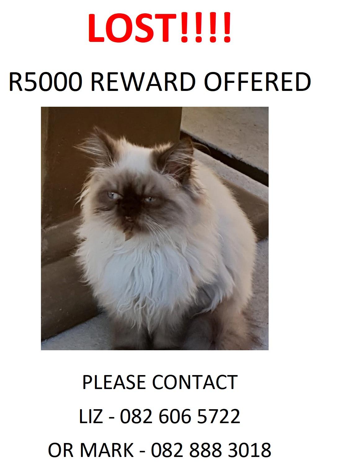 Lost, missing or stolen Persian Kitten