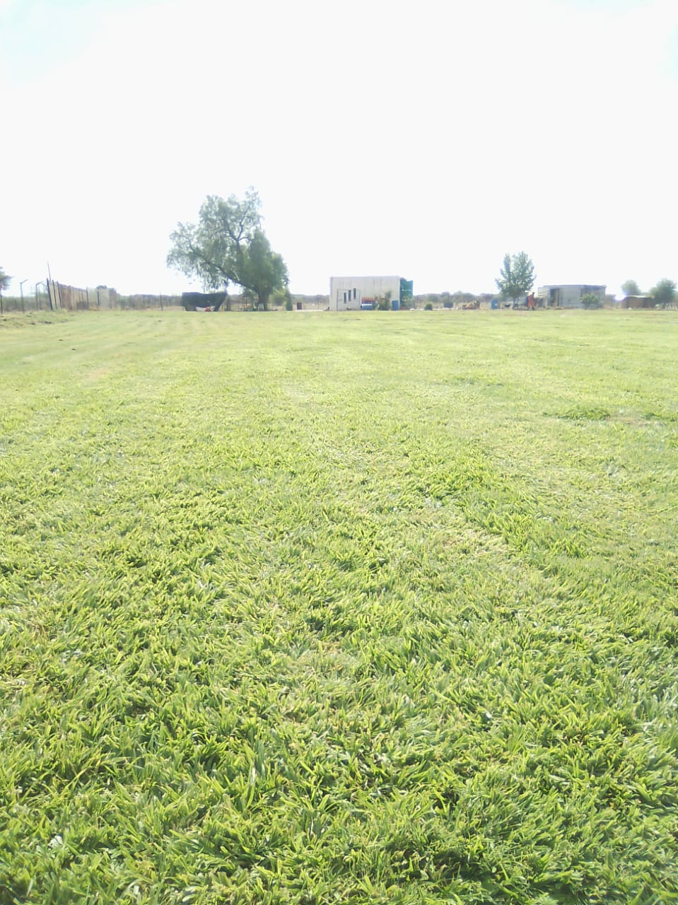 Instant lawn supply and installation,Tree felling and irrigation  call 0834707623