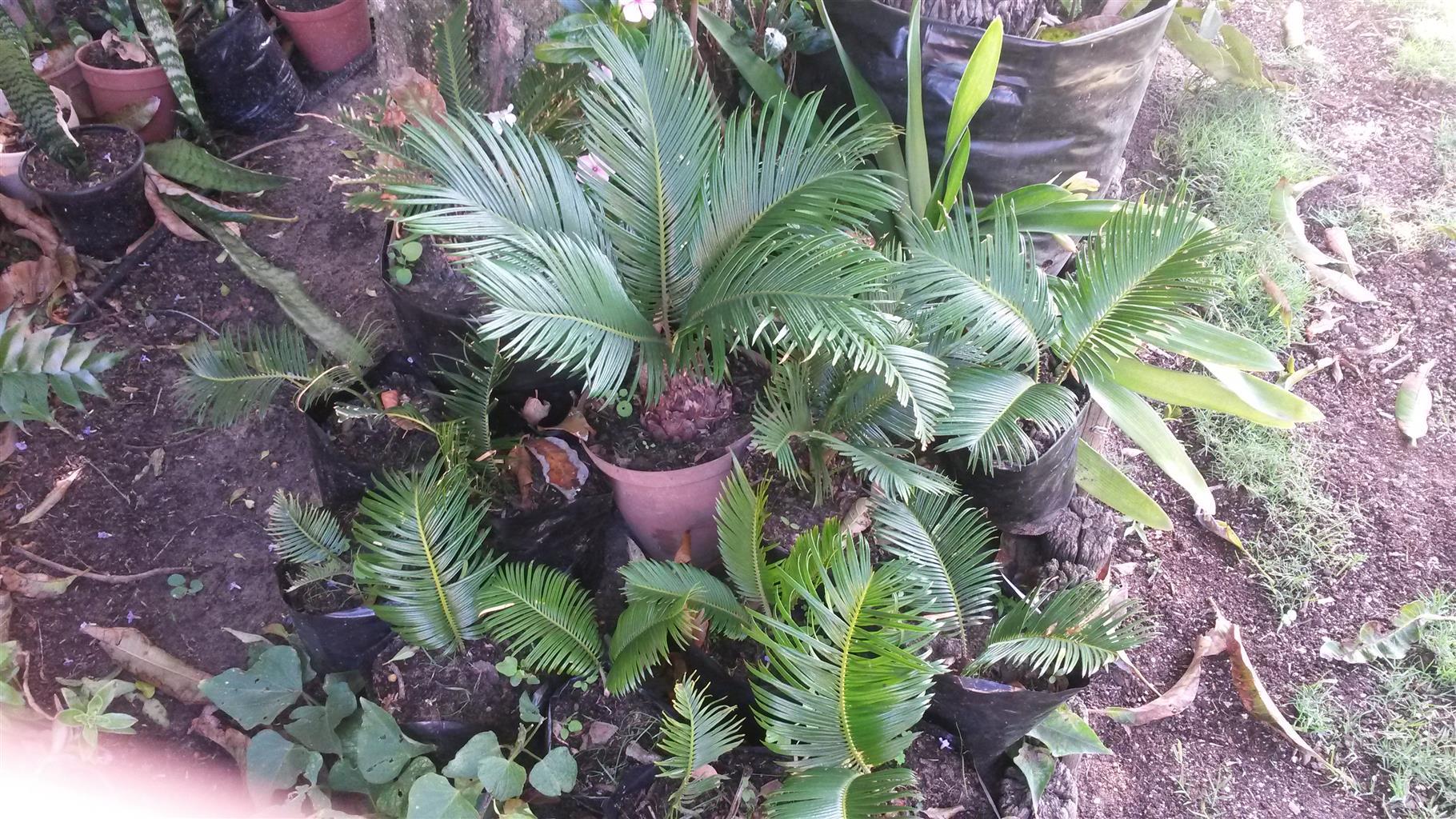Pot plants for sale