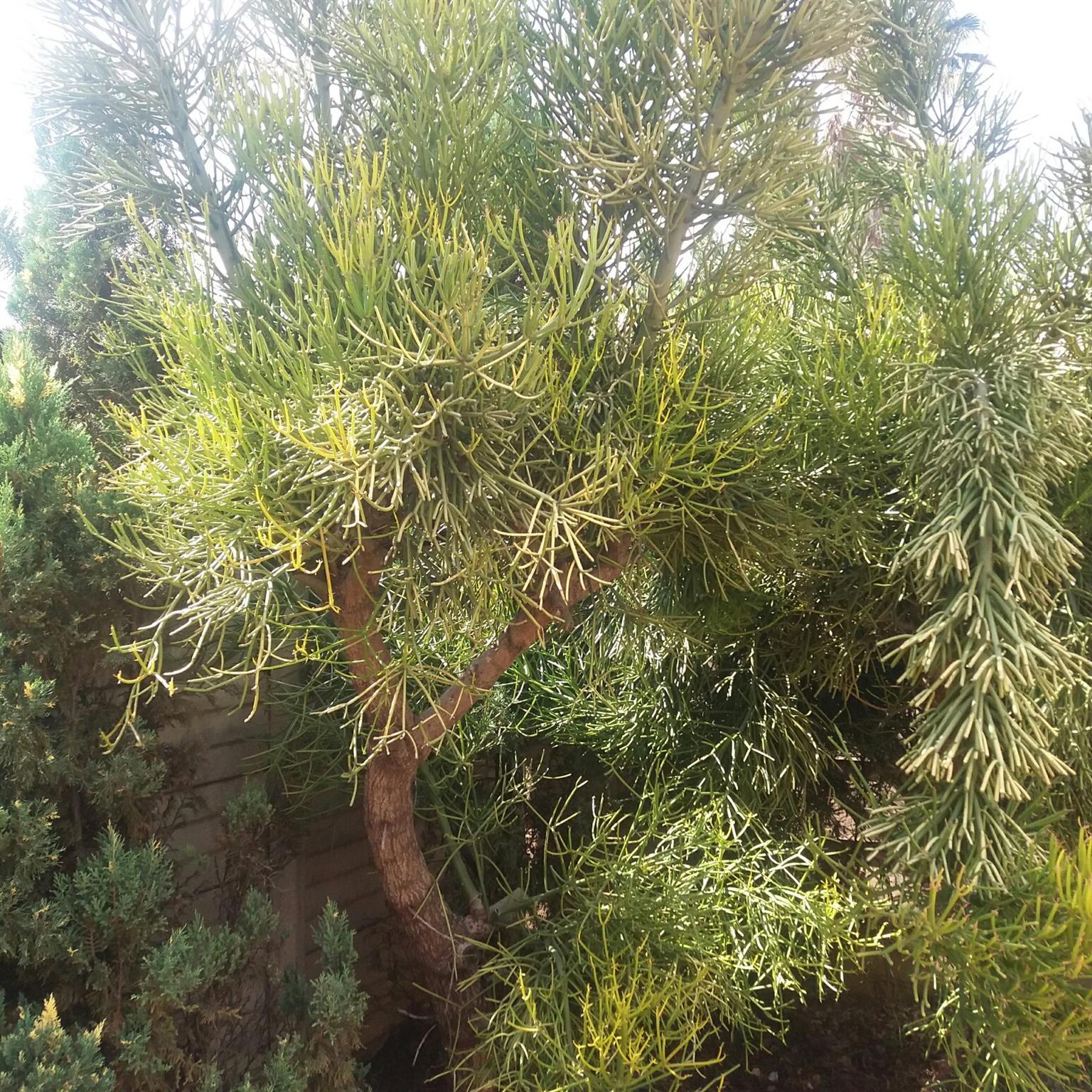 Plants, Cacti, Aloe, philodendron, etc