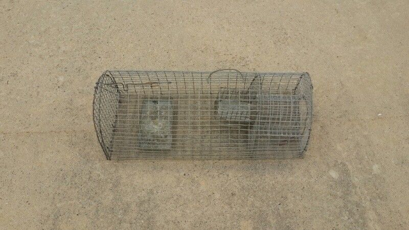 small live animal wildlifre trap suitabble for squirrels and similar pests