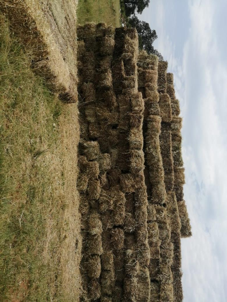 Block grass bales for sale