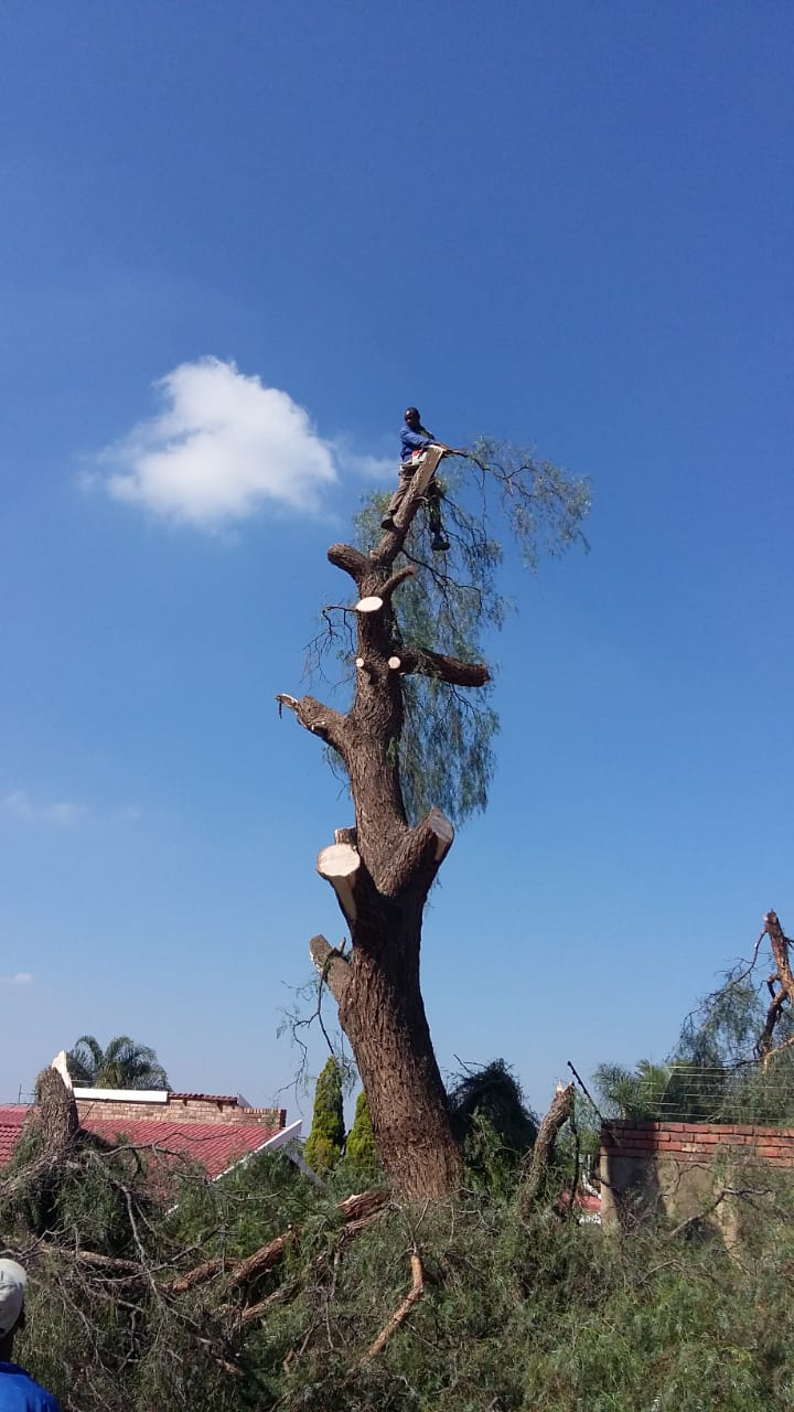 ZIGARA TREE FELLING AND CONSTRUCTION