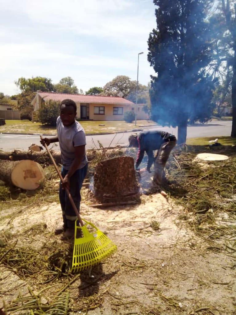 Tree felling in Cape Town