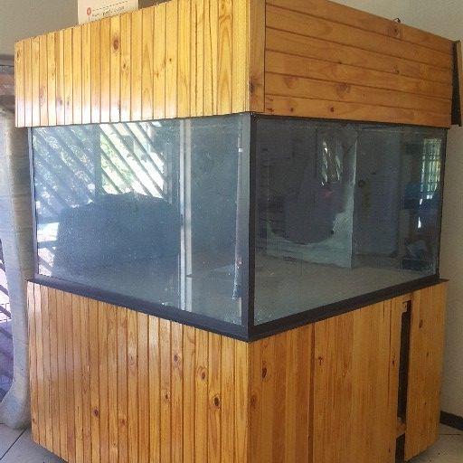 big fish tenk