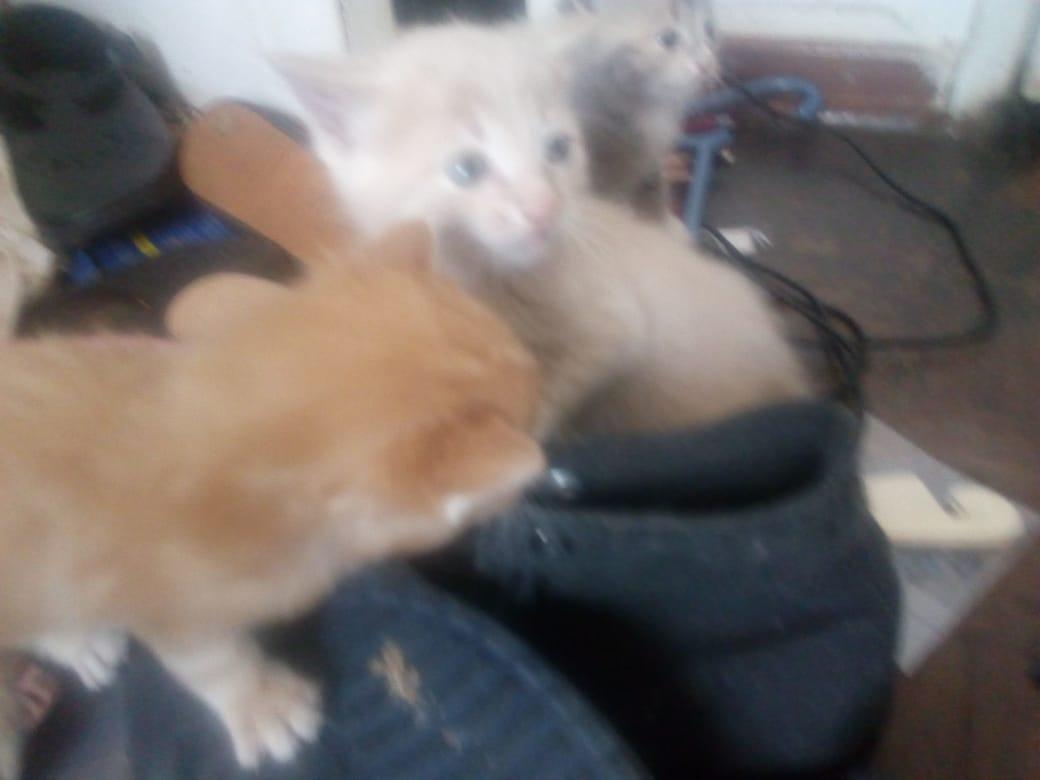 Kittens gorgeous unique babies