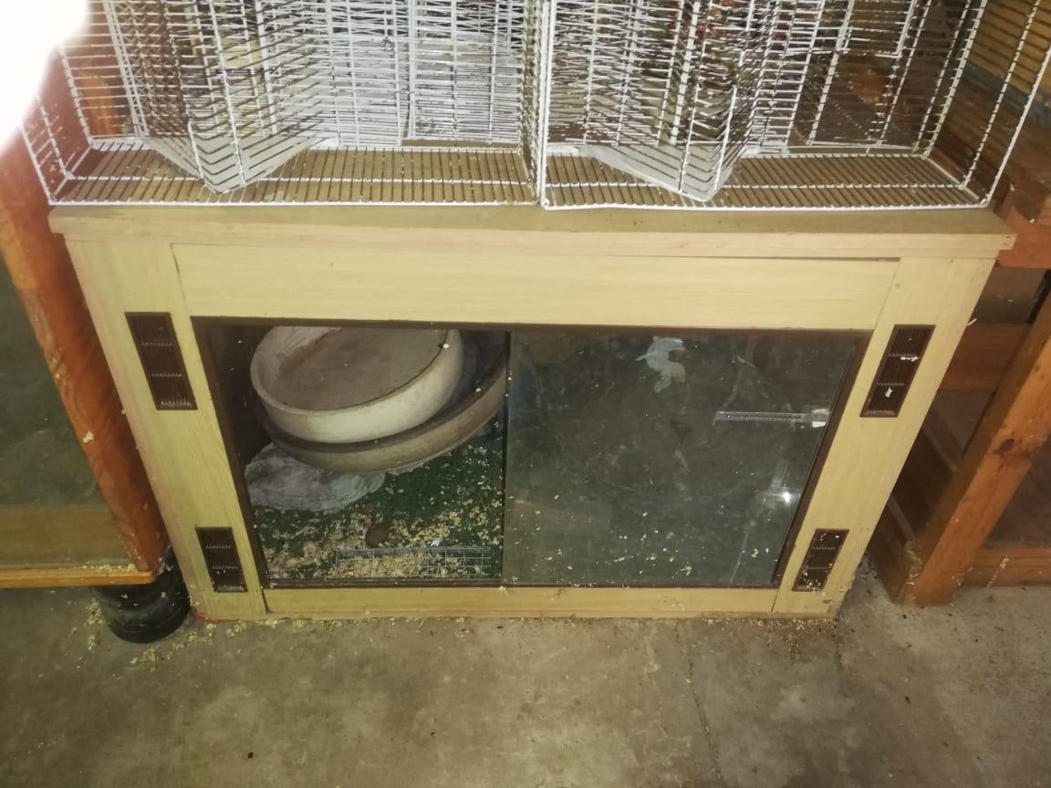 Reptiel kaste
