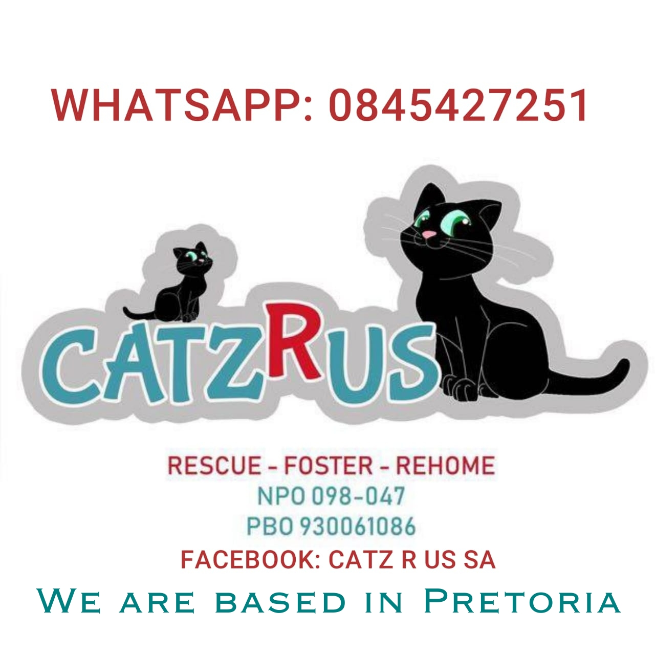 Cat Lovers, we need volunteers to foster needy cats and kittens. CatzRus is a registered Rescue Organisation.