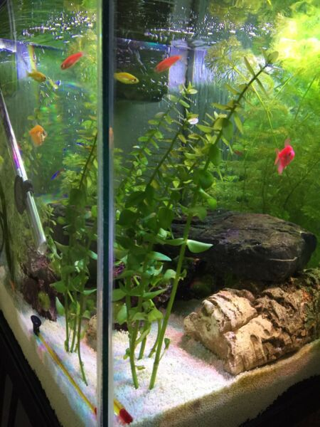Fish tank and stand for sale