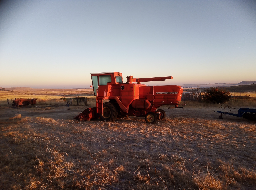 MF300 Combine harvester still in use with maize, sunflower and wheat heads