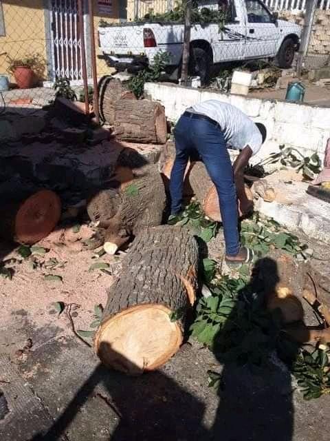 Unique Tree felling & Garden Services