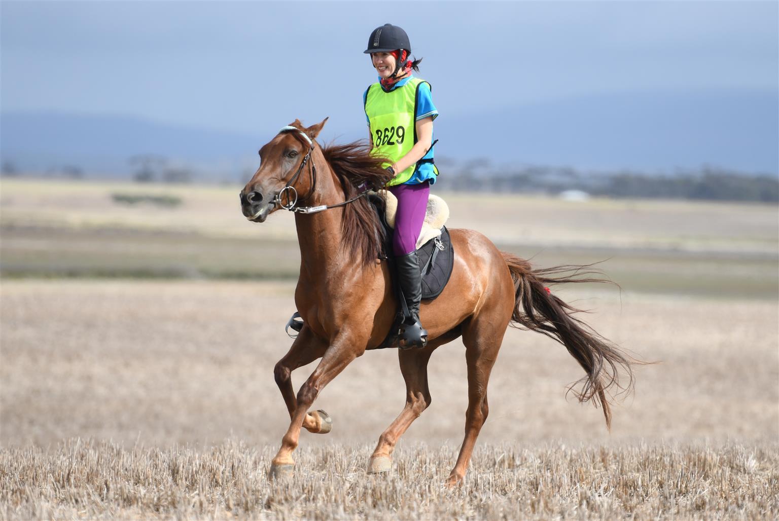 Lovely Boerperd mare for sale