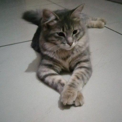 Beautiful cat for sale