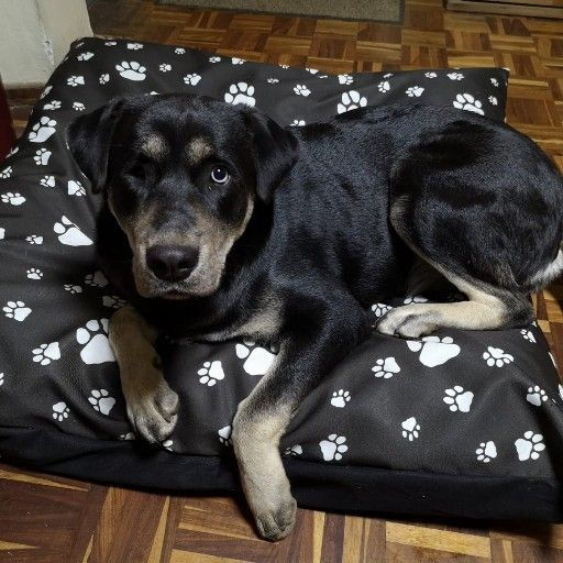 Excellent Quality, Locally Handmade Dog Beds