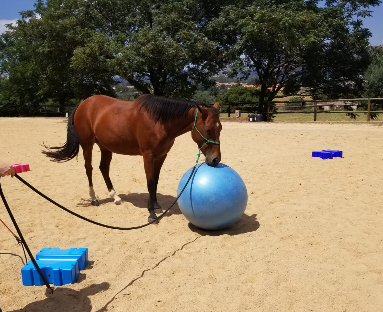 Quarter horse cross to half bait / lease
