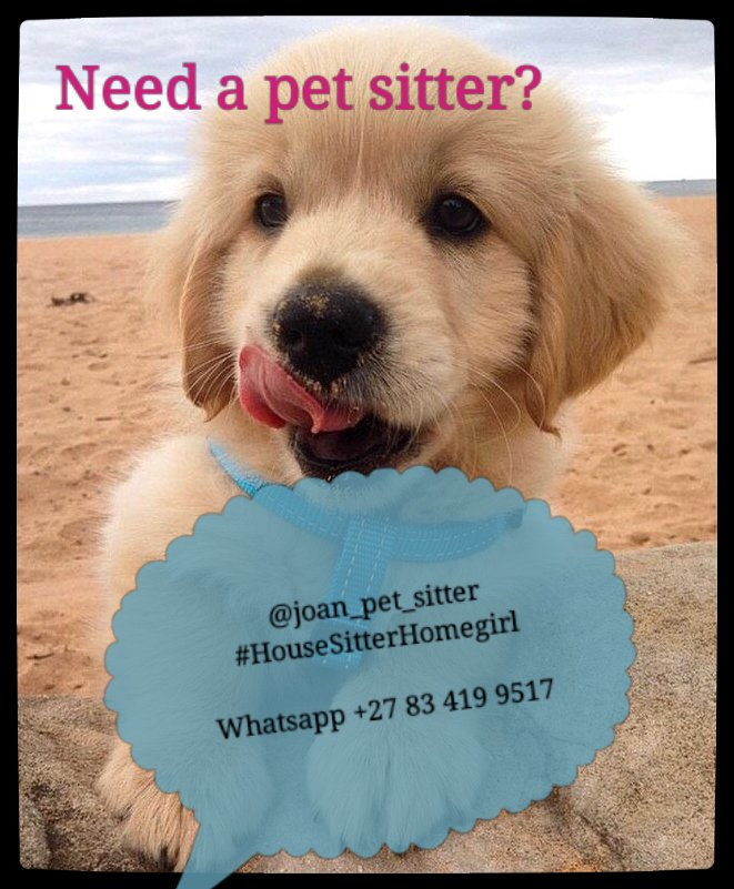 House and pet sitter in and around Cape Town
