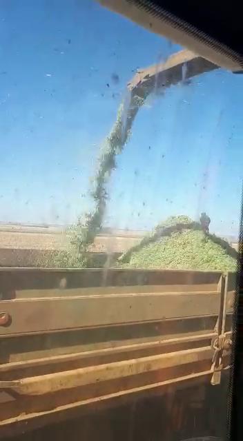 Honey Max Voersorghum  kuilvoer / Silage per ton