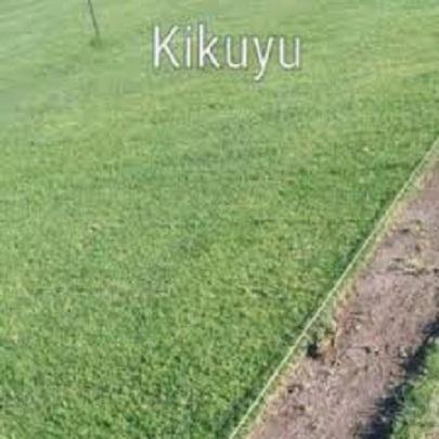 Kikuyu and LM grass