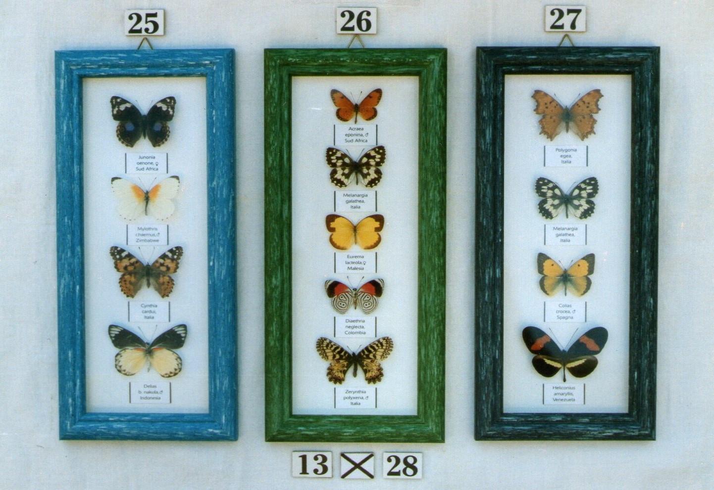 Real framed butterflies