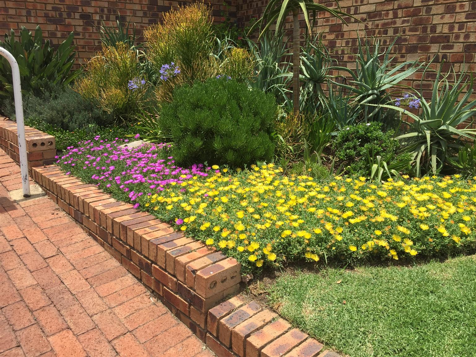 Indigenous ground covers for sale