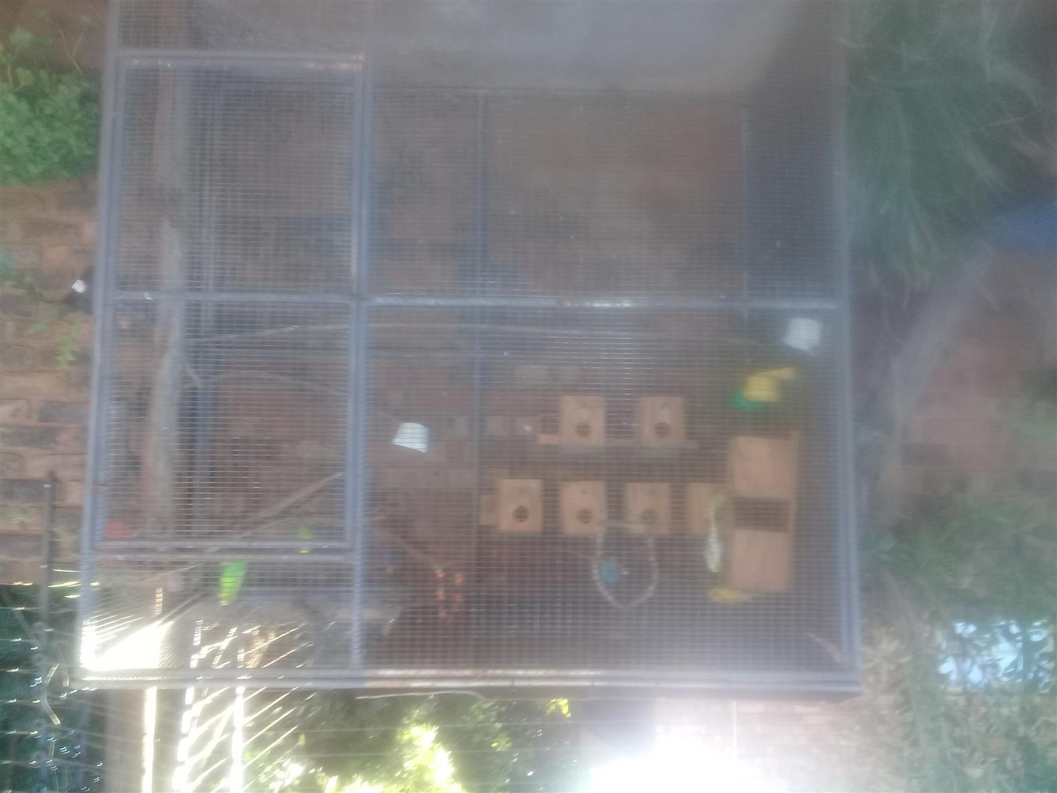 BUDGIE CAGE WITH 8 BUDGIES FOR SALE