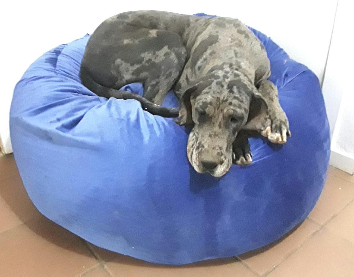Person/Fury Friend Calming/Rest Chair/Bed Deep Sleep on Clouds, Randburg, Contact Lee 0734776357