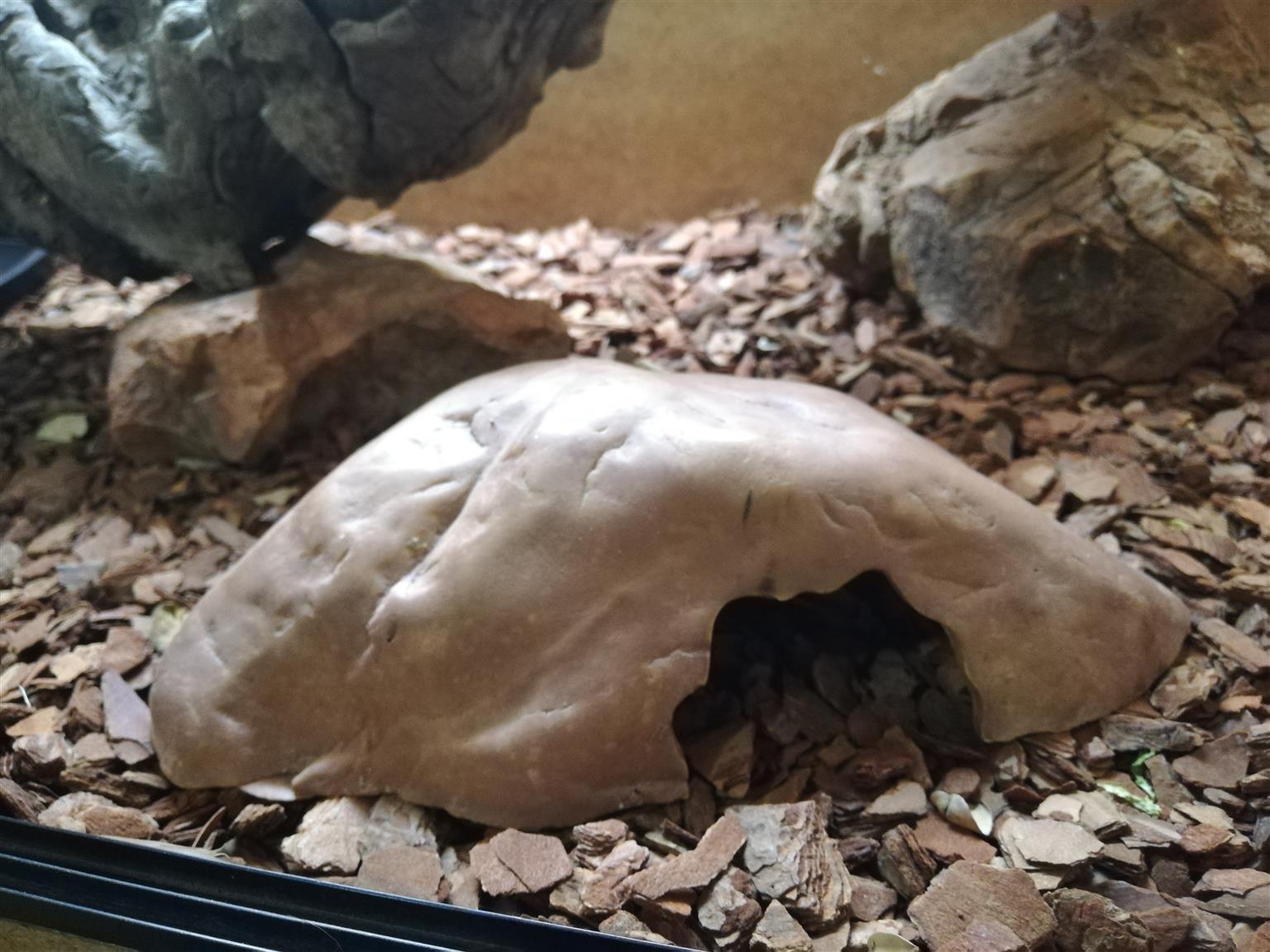 Reptile Vivarium Amazing Condition