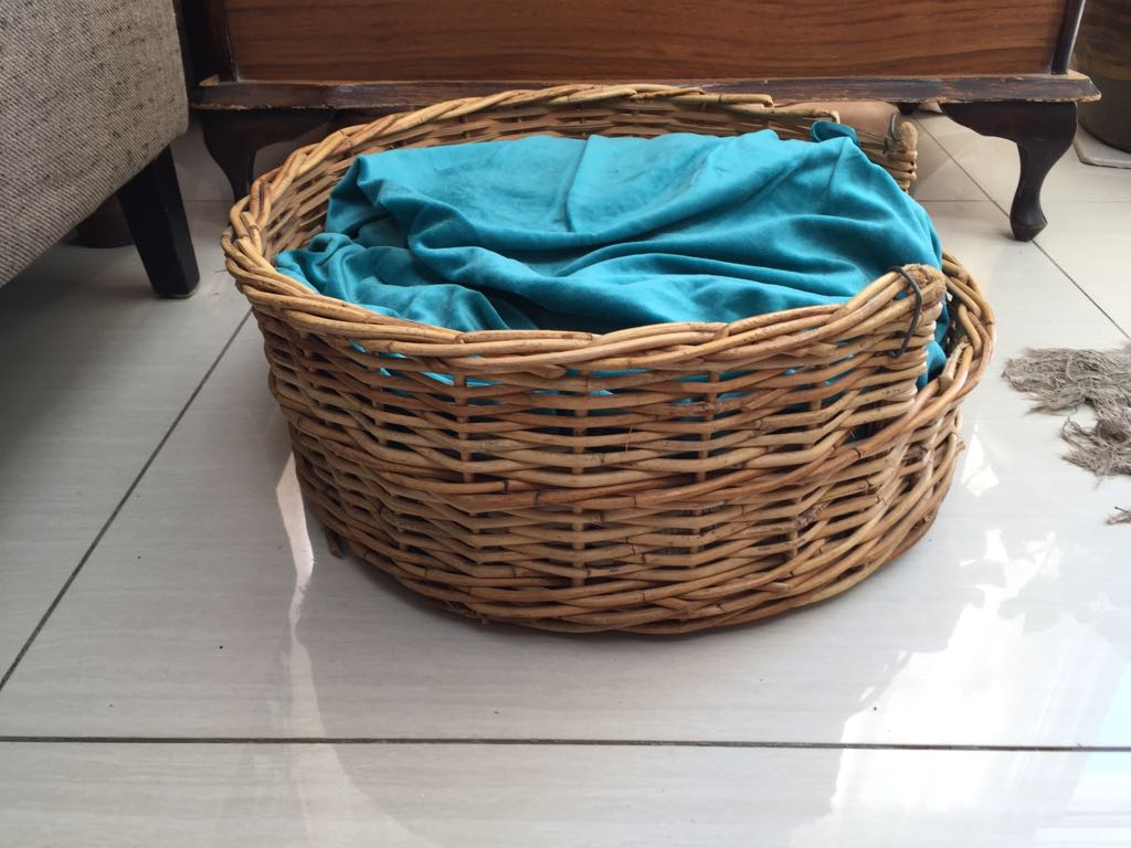 Compact Cane Pet basket for cat or dog or puppies complete with blanket & cushion