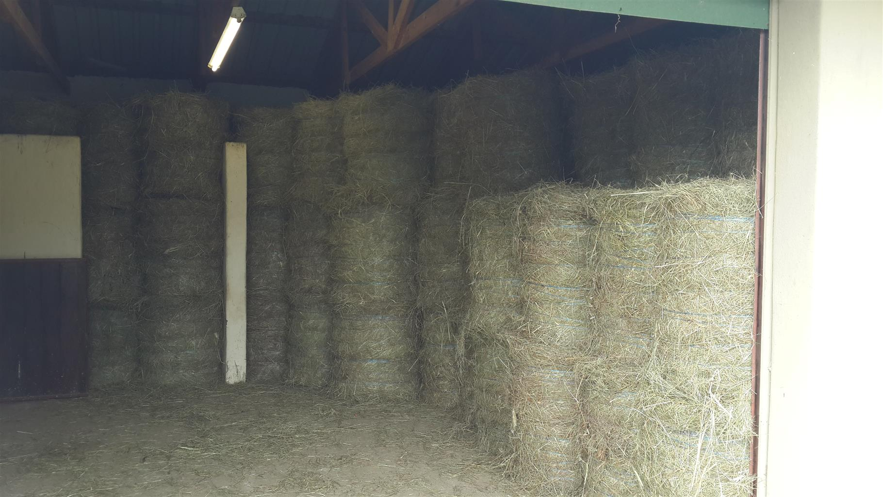 LUCERNE BALES FOR SALES 50Kg's And 25kg's And 250Kg's