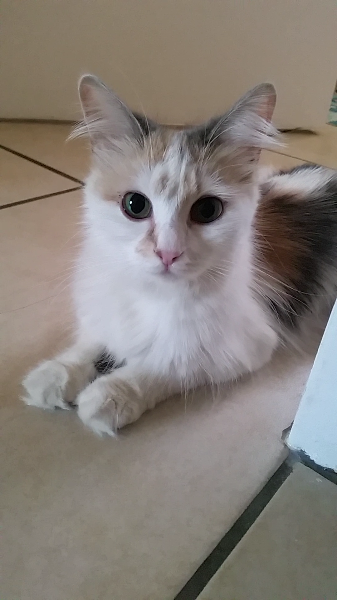 Princess Whisky invites applications for new staff (a beautiful CatzRus Cat to adopt in Pretoria East)