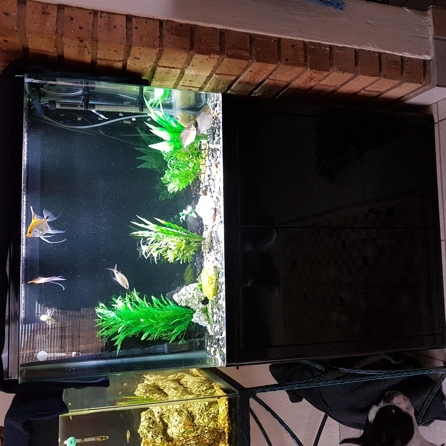 Sunsun Fish Tank For Sale