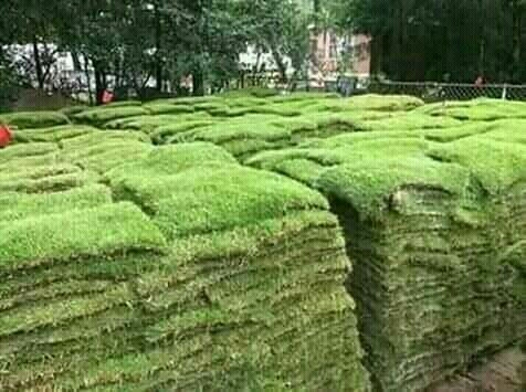 TERRY INSTANT LAWN SUPPLIES