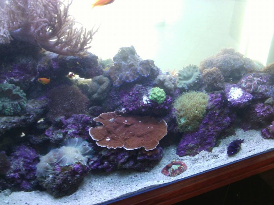 eca - professional custom built aquariums